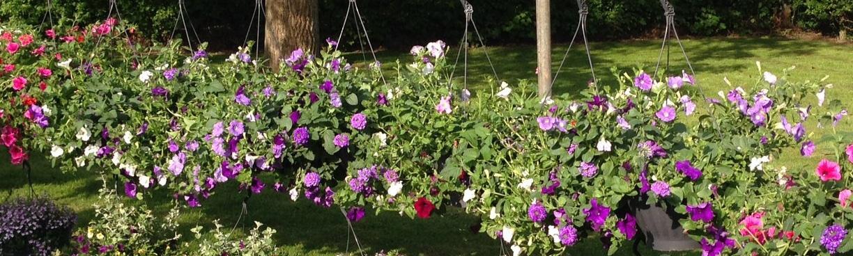 Hanging Baskets – Hoeve Schettereind